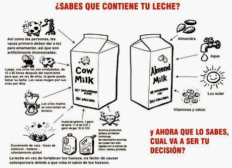 leche vegetal 4