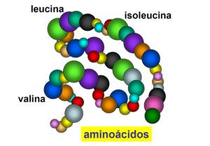 aminoacidos-ramificados-bcaas2
