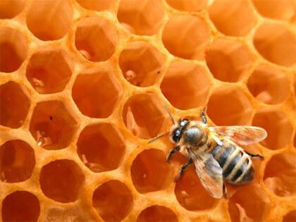 miel-de-abeja-3
