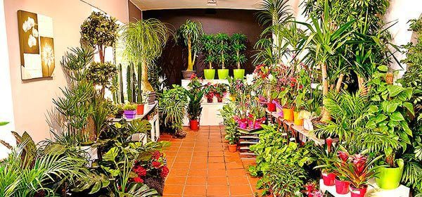 big_134045_134116_centro_jardineria