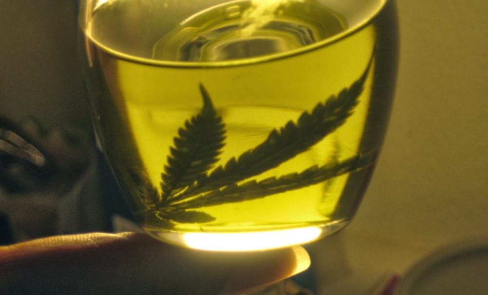 cannabis-infused-olive-oil-recipe-thcfinder-950x575